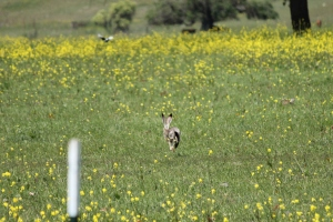 jack rabbit!!!