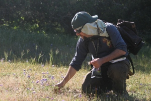 Steward of the land with miniature lupine.
