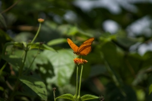 I'm staying at Green Hills Butterfly Ranch, so butterflies rule here!